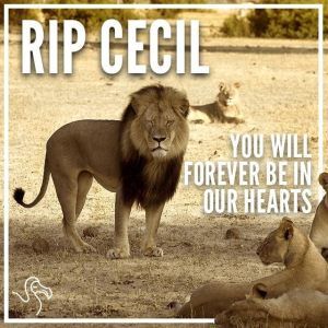 Cecil-the-Lion-640x640
